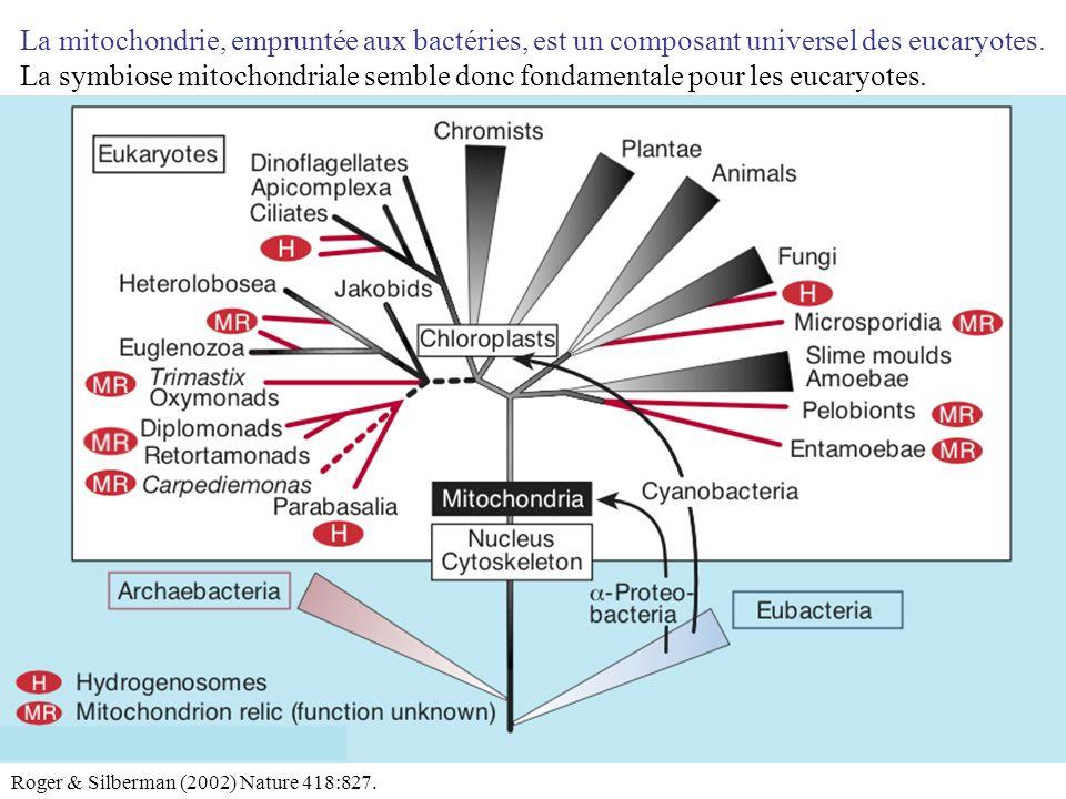 La mitochondrie, empruntée aux bactéries, est un composant universel des eucaryotes.