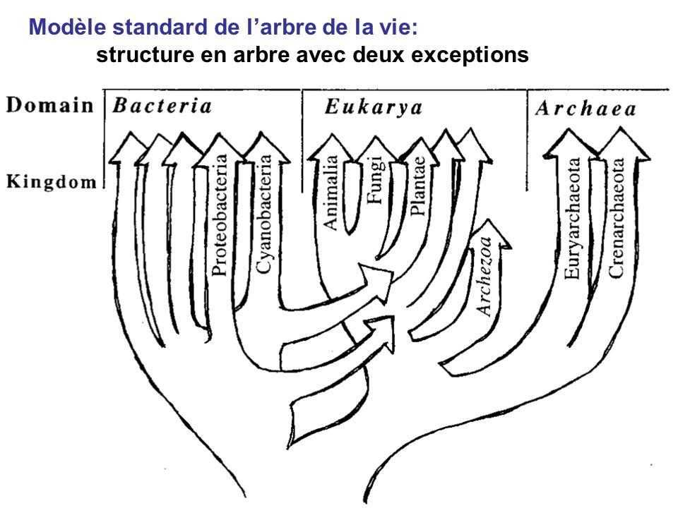 Modèle standard de l'arbre de la vie: