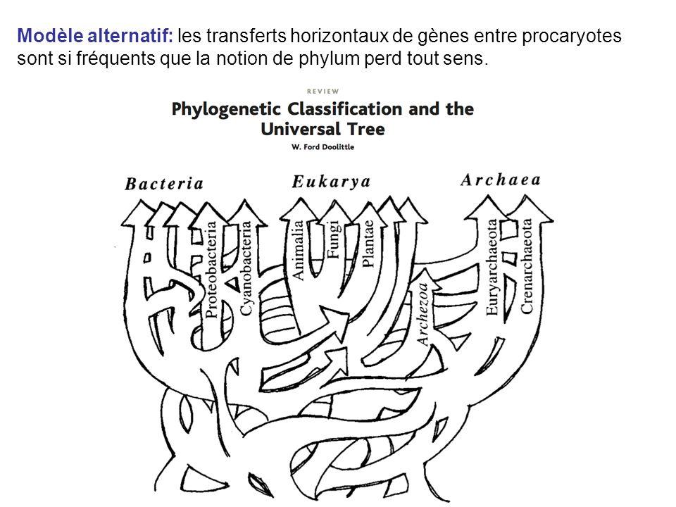 Modèle alternatif: les transferts horizontaux de gènes entre procaryotes sont si fréquents que la notion de phylum perd tout sens.