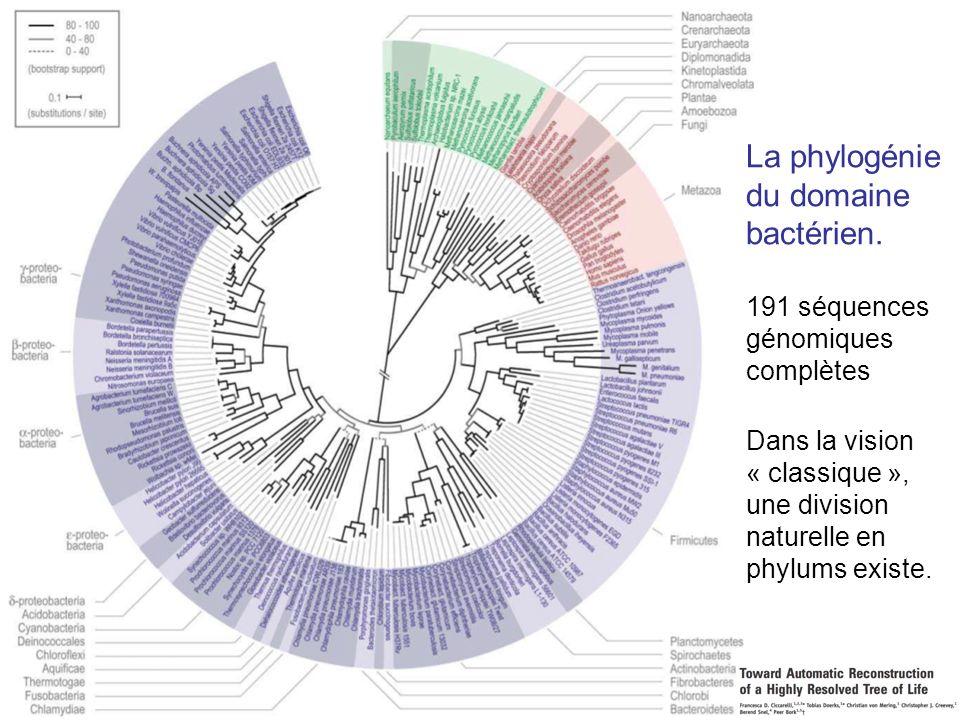 La phylogénie du domaine bactérien.