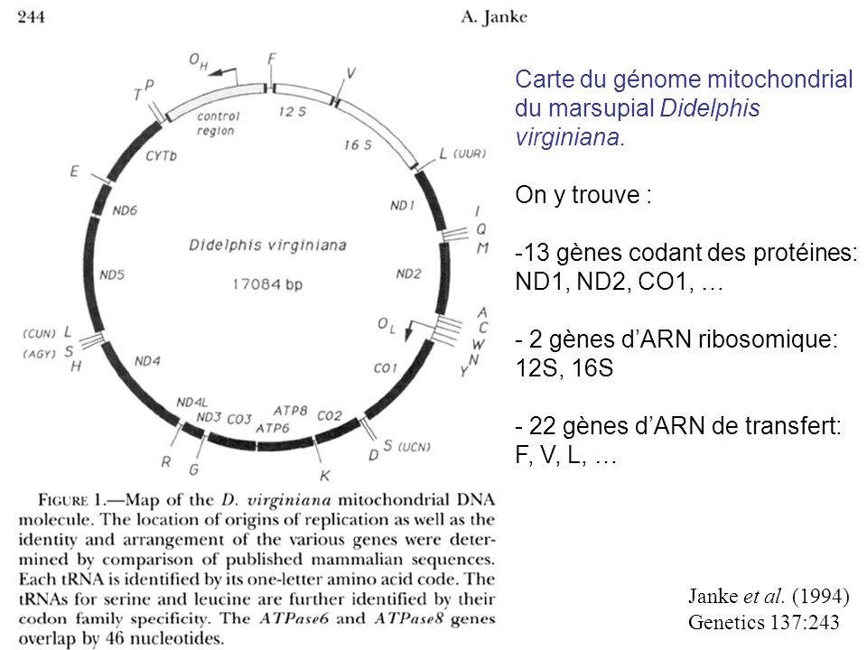 Carte du génome mitochondrial du marsupial Didelphis virginiana.