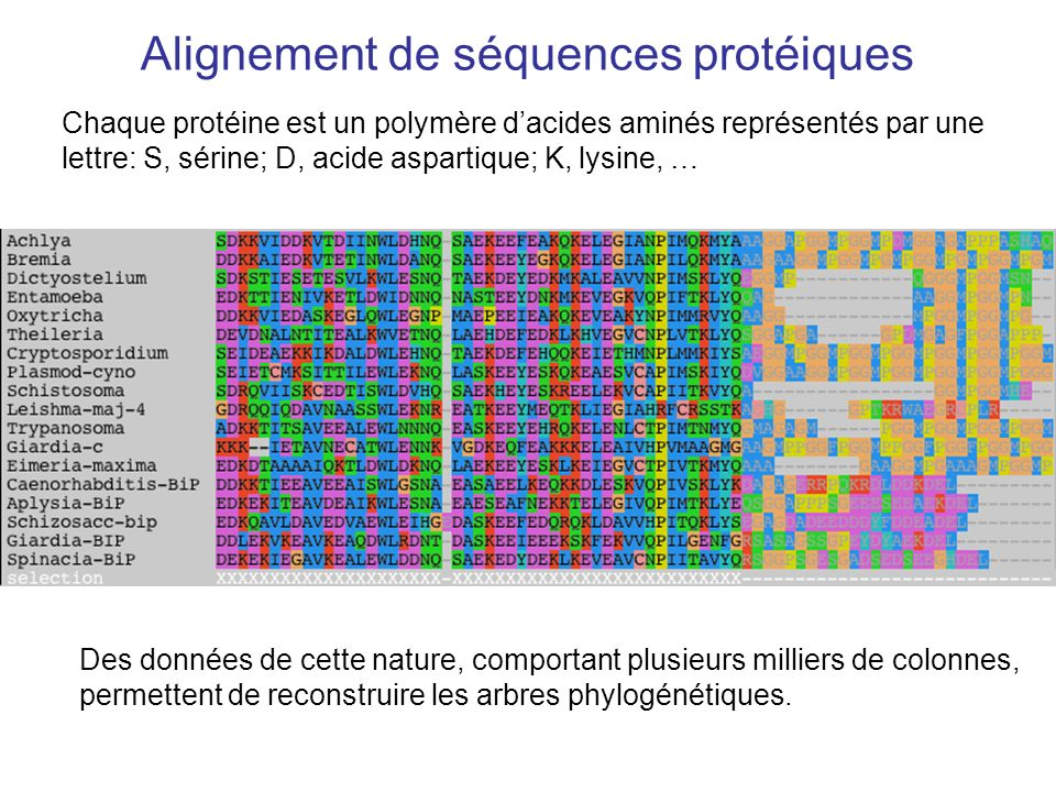 Alignement de séquences protéiques