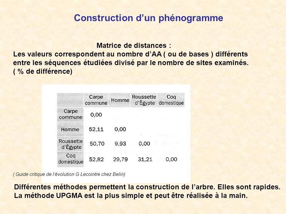 Construction d'un phénogramme