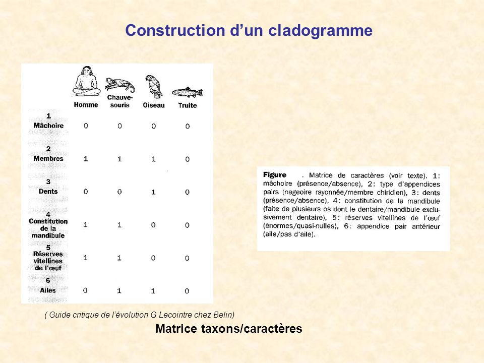 Construction d'un cladogramme