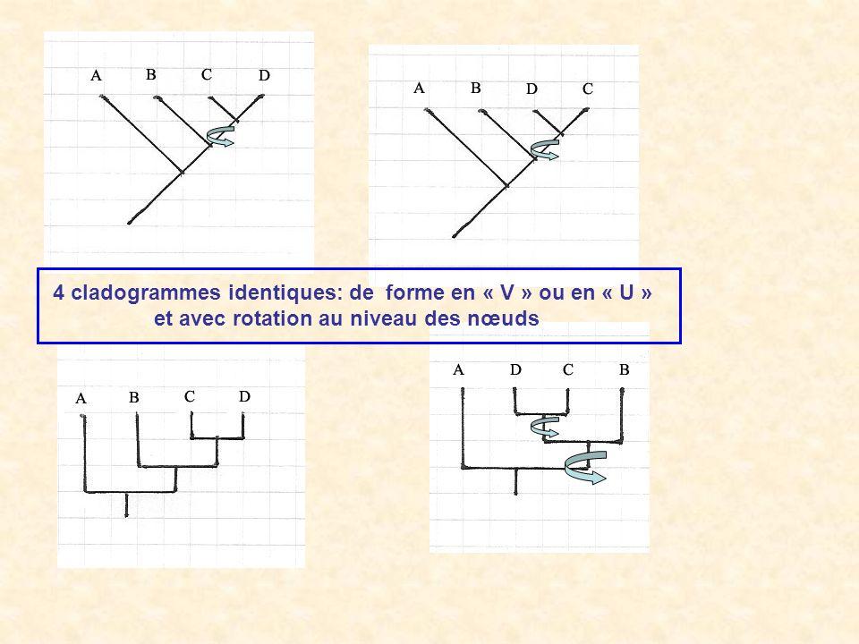 4 cladogrammes identiques: de forme en « V » ou en « U »