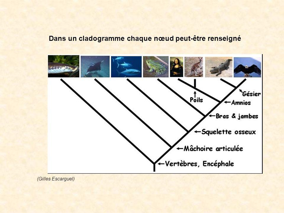 Dans un cladogramme chaque nœud peut-être renseigné