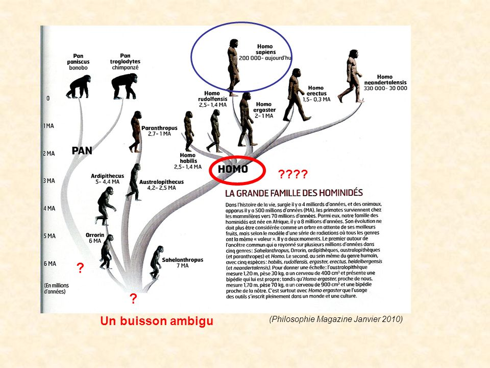 Un buisson ambigu (Philosophie Magazine Janvier 2010)