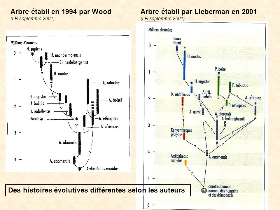 Arbre établi en 1994 par Wood Arbre établi par Lieberman en 2001