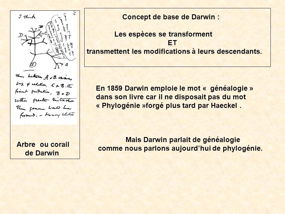 Concept de base de Darwin :