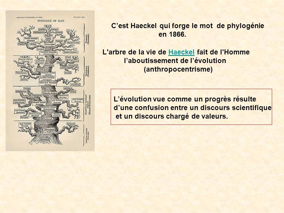 C'est Haeckel qui forge le mot de phylogénie
