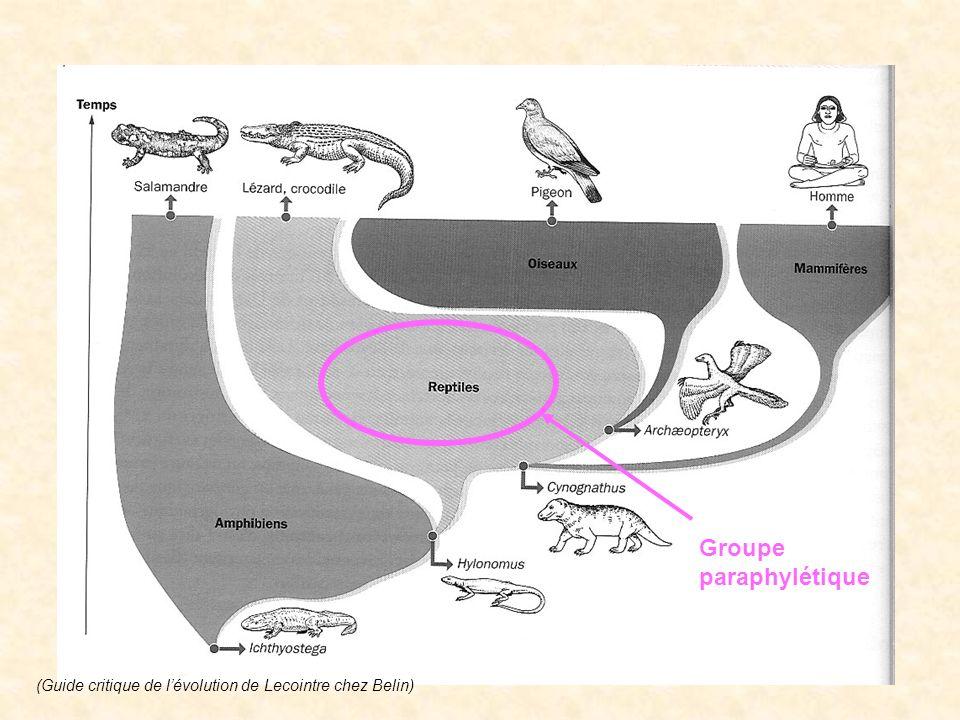 Groupe paraphylétique
