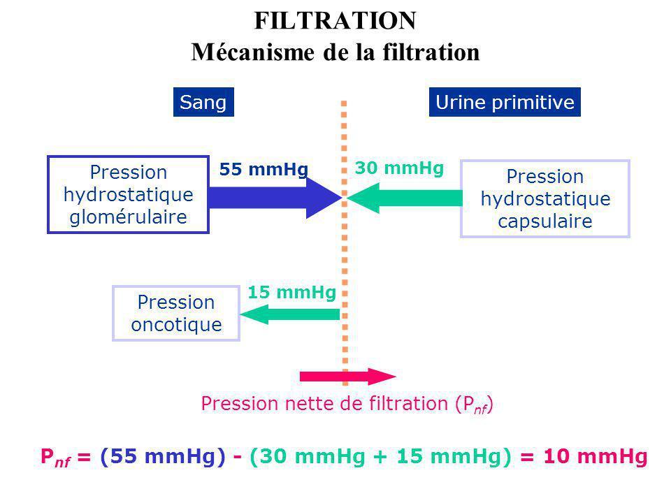 FILTRATION Mécanisme de la filtration