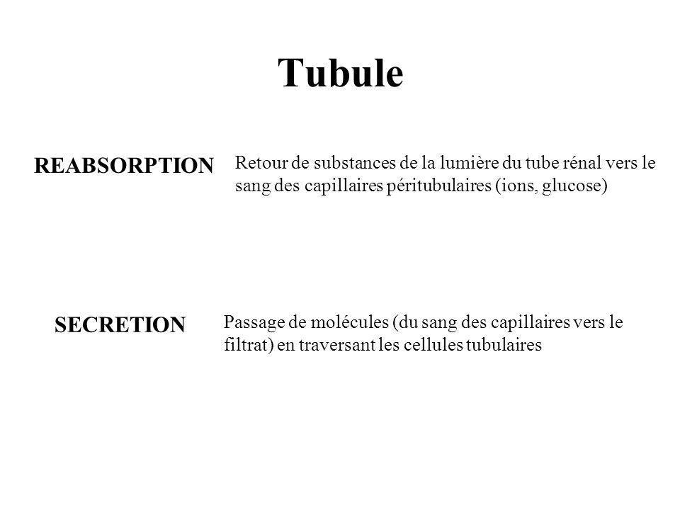 Tubule REABSORPTION SECRETION