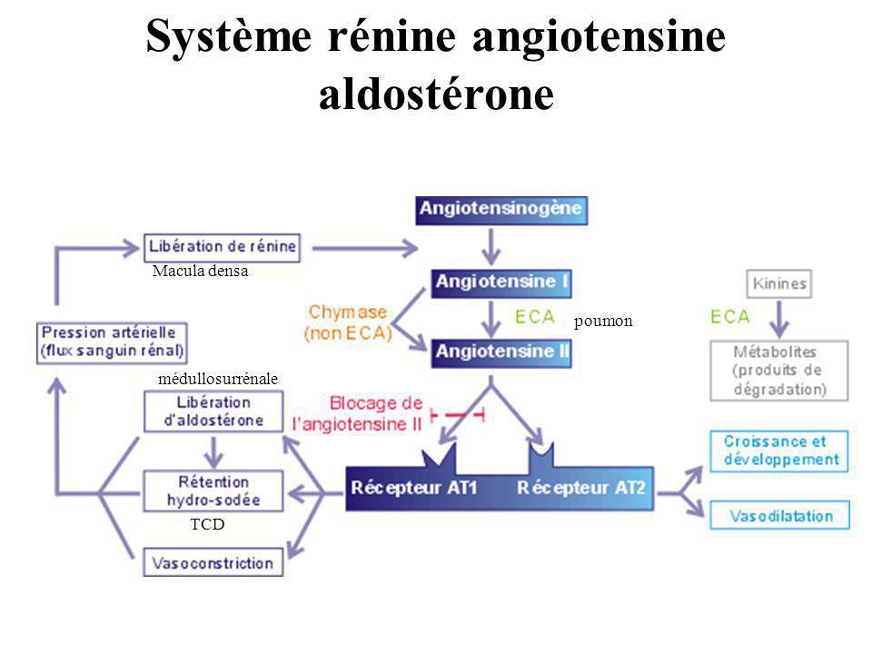 Système rénine angiotensine aldostérone