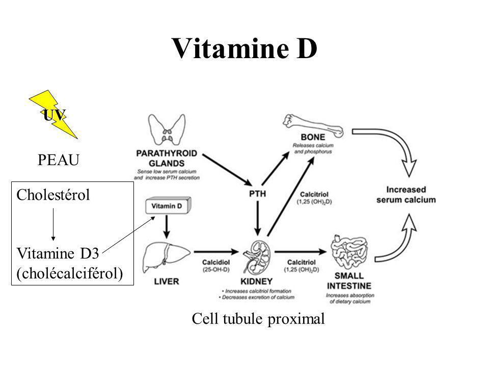Vitamine D UV PEAU Cholestérol Vitamine D3 (cholécalciférol)