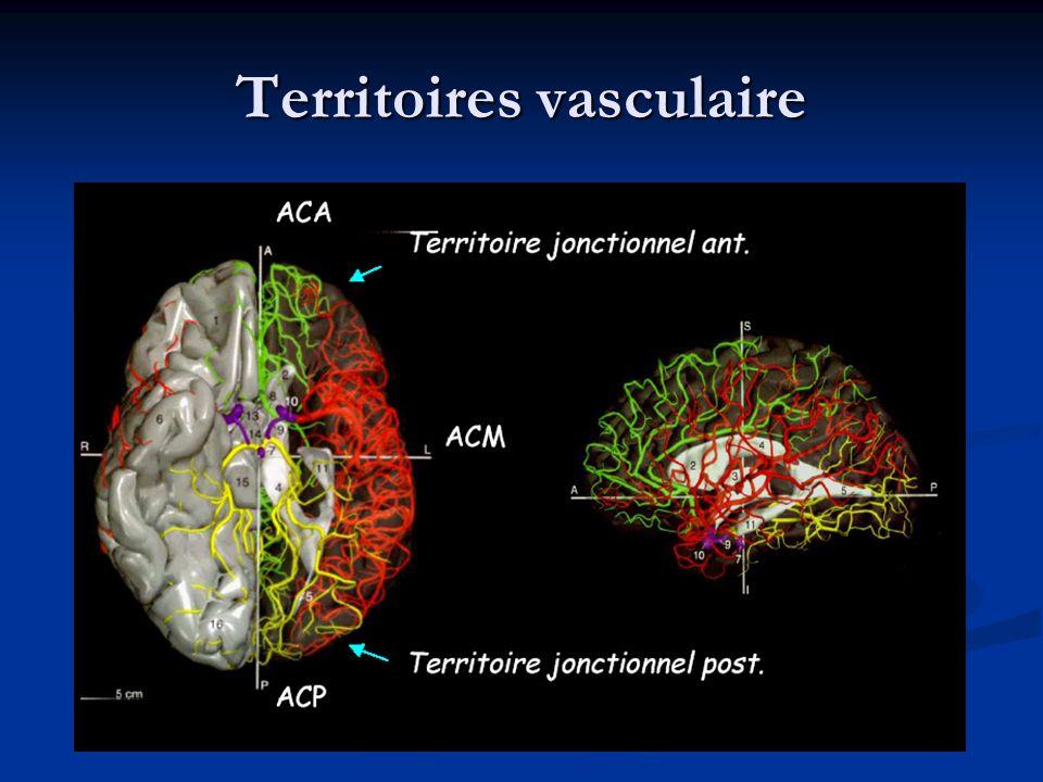 Territoires vasculaire
