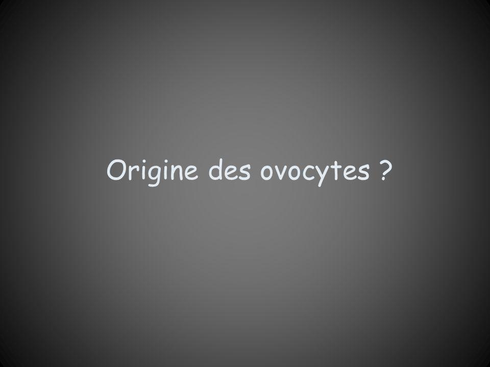 Origine des ovocytes