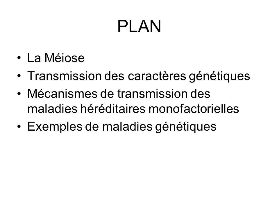 PLAN La Méiose Transmission des caractères génétiques