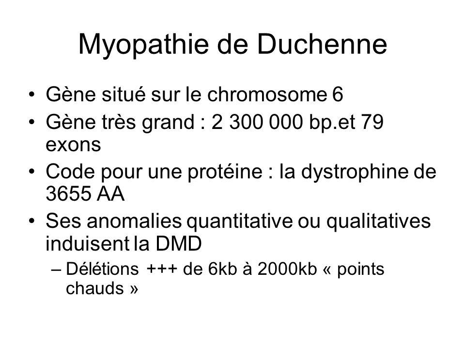 Myopathie de Duchenne Gène situé sur le chromosome 6