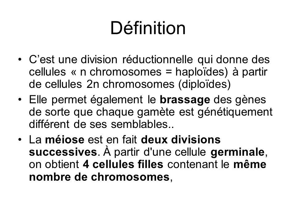 DéfinitionC'est une division réductionnelle qui donne des cellules « n chromosomes = haploïdes) à partir de cellules 2n chromosomes (diploïdes)