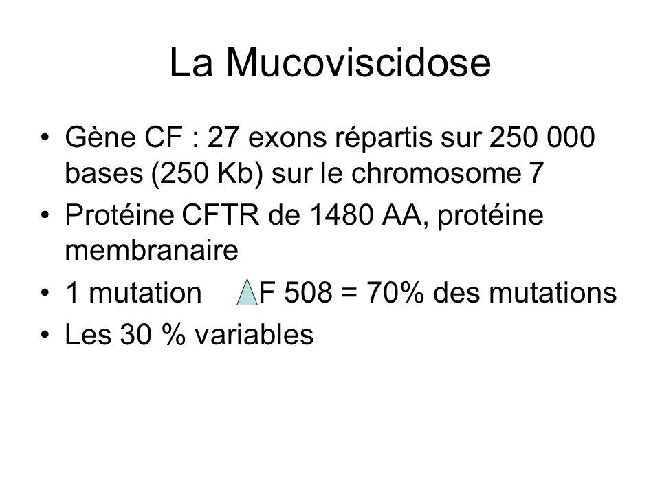 La MucoviscidoseGène CF : 27 exons répartis sur 250 000 bases (250 Kb) sur le chromosome 7. Protéine CFTR de 1480 AA, protéine membranaire.