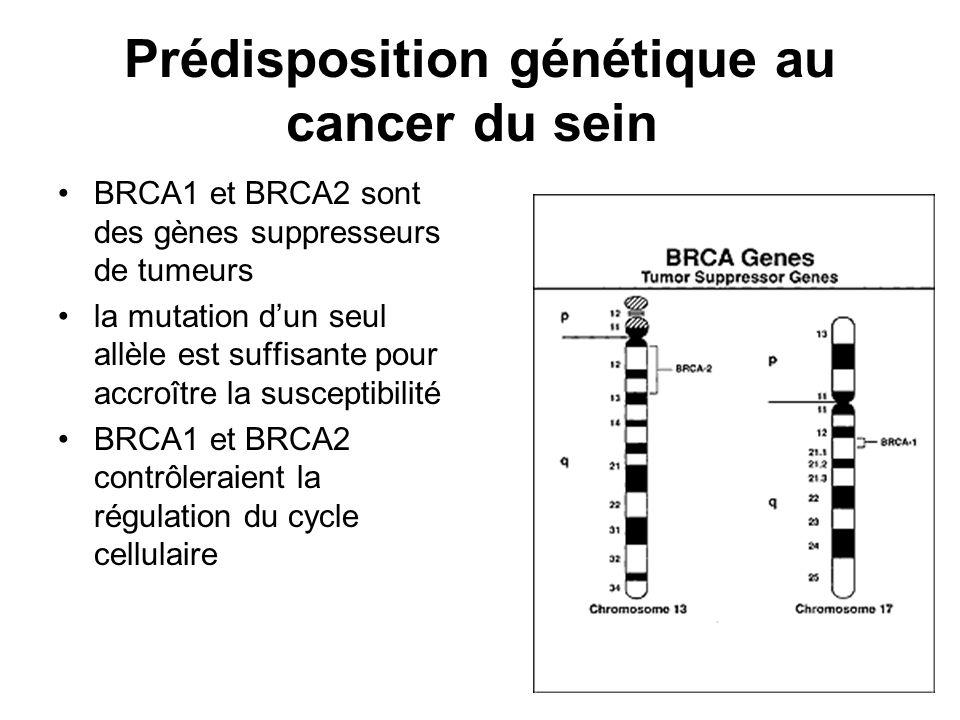 Prédisposition génétique au cancer du sein