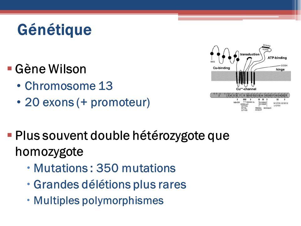 Génétique Gène Wilson Plus souvent double hétérozygote que homozygote
