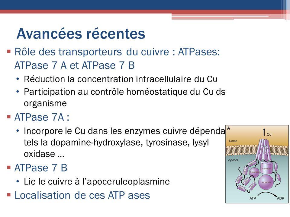 Avancées récentes Rôle des transporteurs du cuivre : ATPases: ATPase 7 A et ATPase 7 B. Réduction la concentration intracellulaire du Cu.