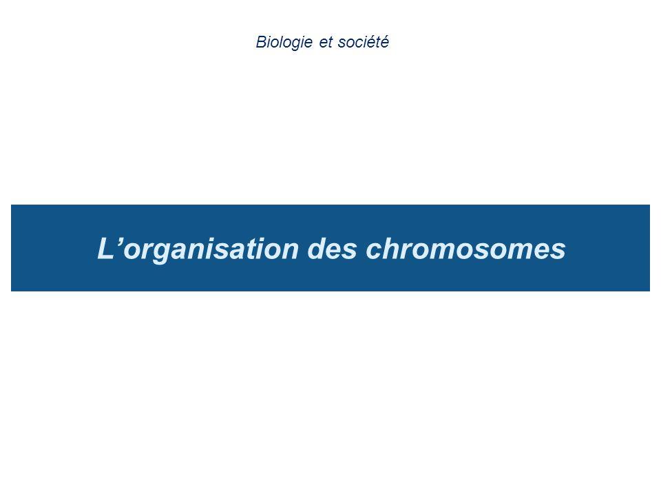 L'organisation des chromosomes