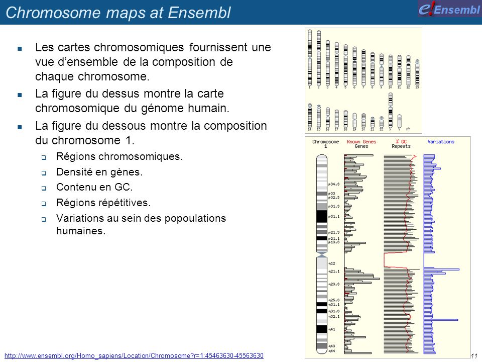 Chromosome maps at Ensembl