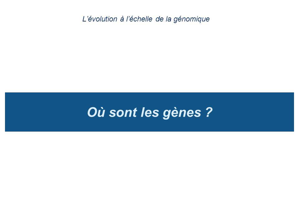 L'évolution à l'échelle de la génomique