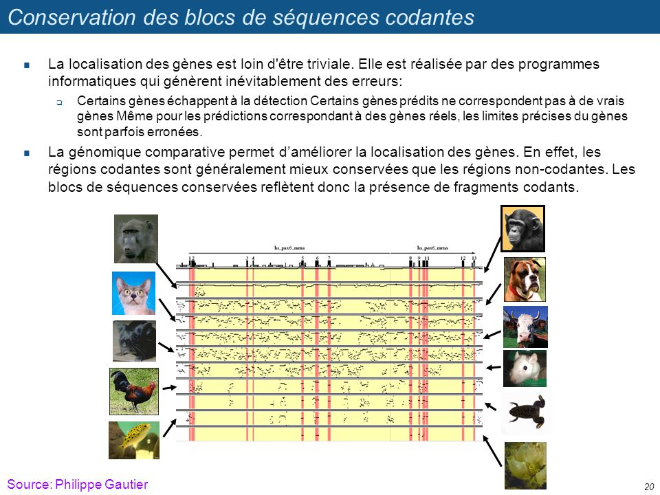 Conservation des blocs de séquences codantes