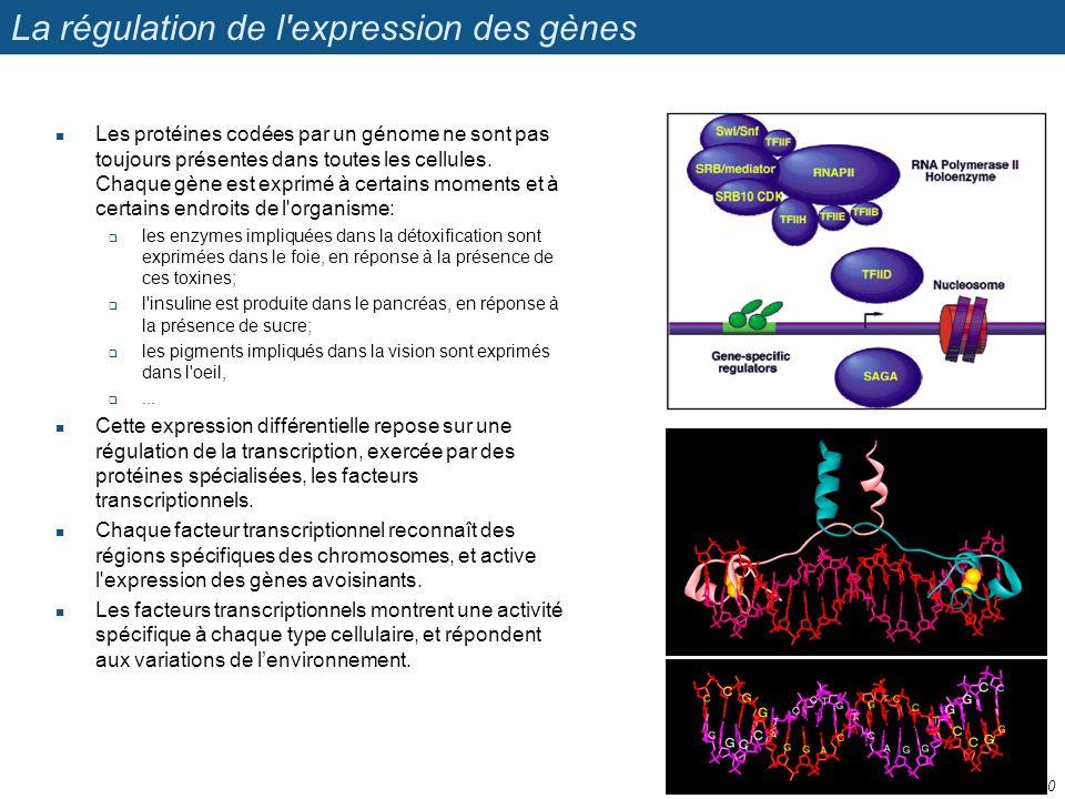 La régulation de l expression des gènes