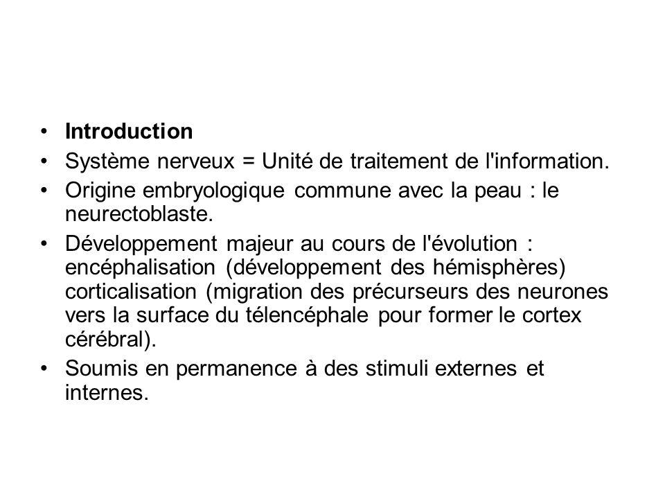 Introduction Système nerveux = Unité de traitement de l information. Origine embryologique commune avec la peau : le neurectoblaste.