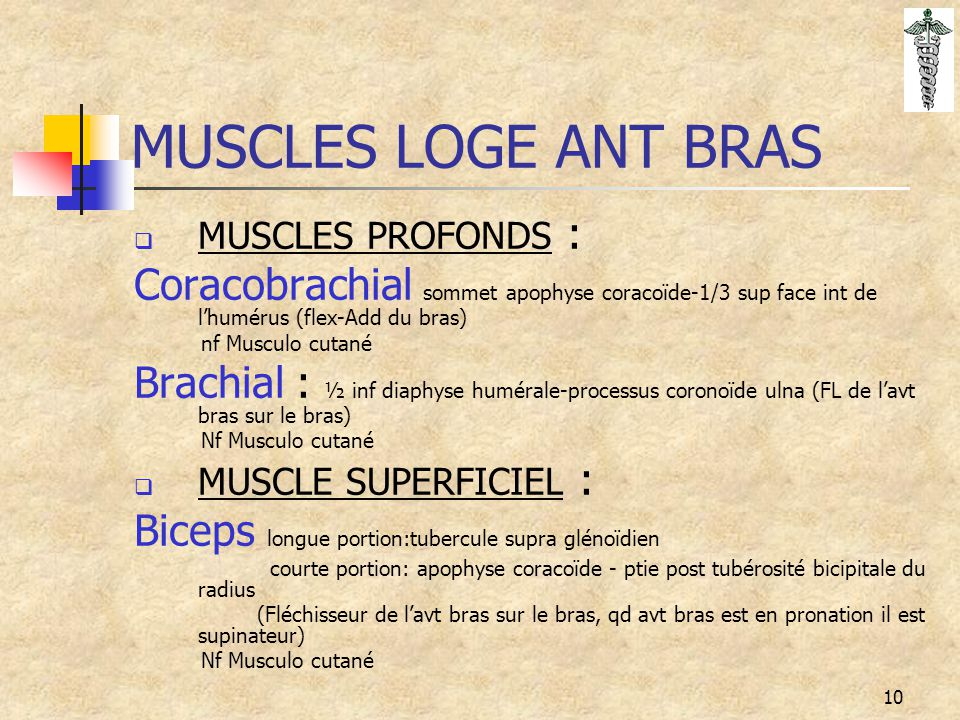MUSCLES LOGE ANT BRAS MUSCLES PROFONDS : Coracobrachial sommet apophyse coracoïde-1/3 sup face int de l'humérus (flex-Add du bras)