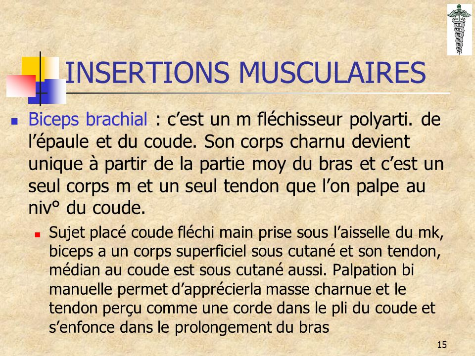 INSERTIONS MUSCULAIRES