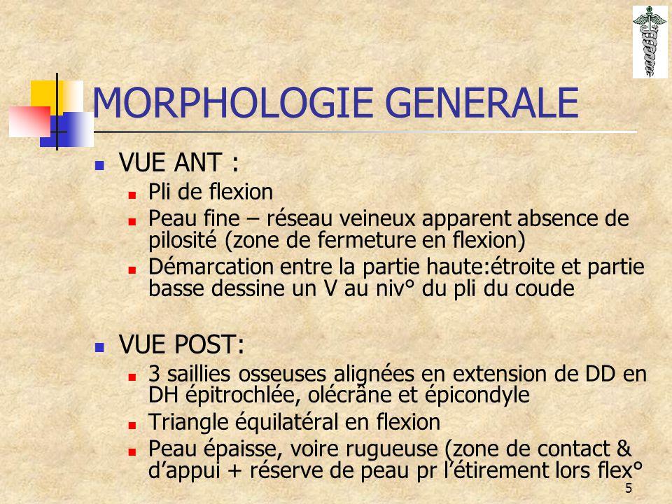 MORPHOLOGIE GENERALE VUE ANT : VUE POST: Pli de flexion