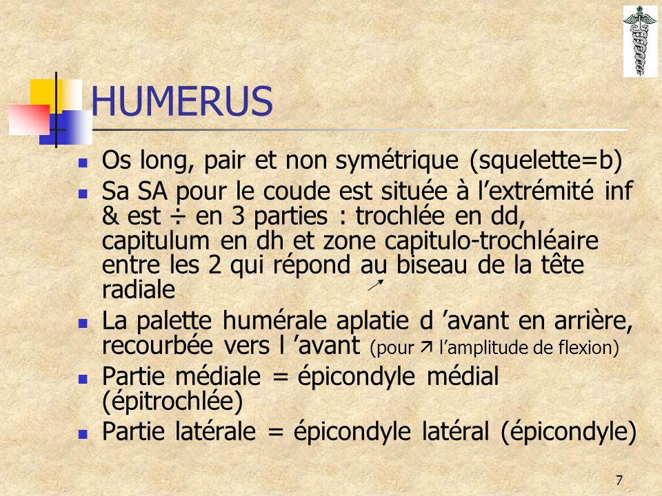 HUMERUS Os long, pair et non symétrique (squelette=b)