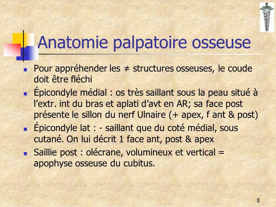 Anatomie palpatoire osseuse