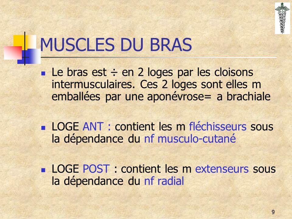 MUSCLES DU BRAS Le bras est ÷ en 2 loges par les cloisons intermusculaires. Ces 2 loges sont elles m emballées par une aponévrose= a brachiale.