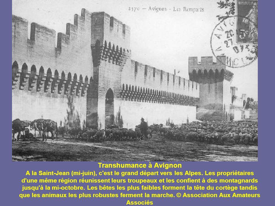 Transhumance à Avignon A la Saint-Jean (mi-juin), c est le grand départ vers les Alpes.