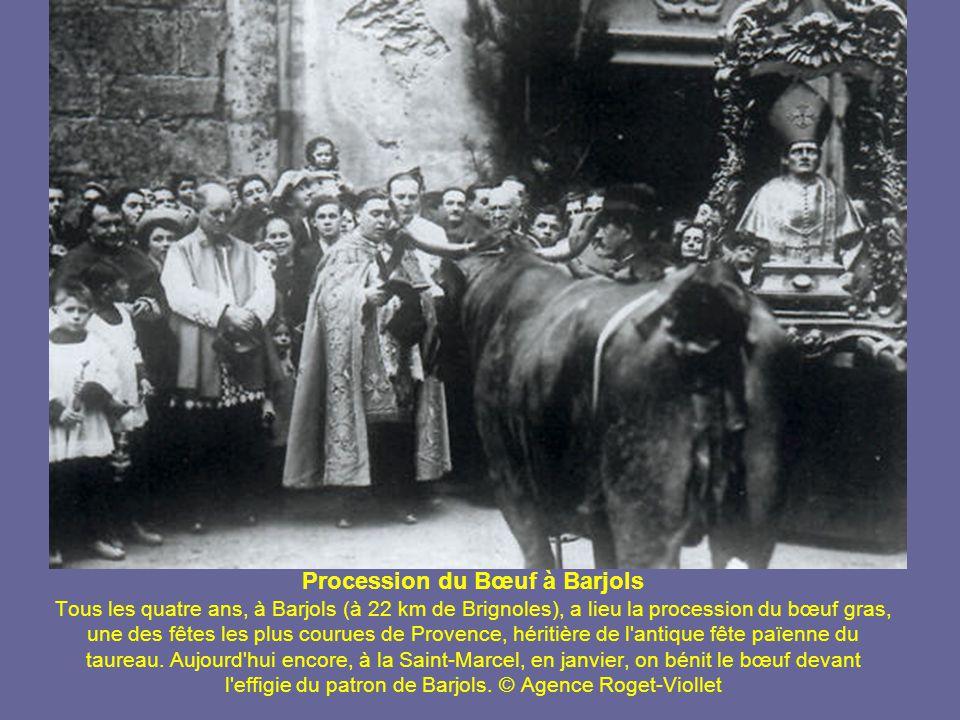 Procession du Bœuf à Barjols Tous les quatre ans, à Barjols (à 22 km de Brignoles), a lieu la procession du bœuf gras, une des fêtes les plus courues de Provence, héritière de l antique fête païenne du taureau.