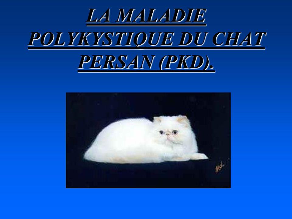 LA MALADIE POLYKYSTIQUE DU CHAT PERSAN (PKD).