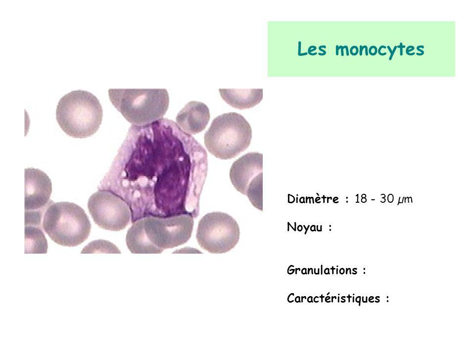 Les monocytes Diamètre : 18 - 30 µm Noyau : Granulations :