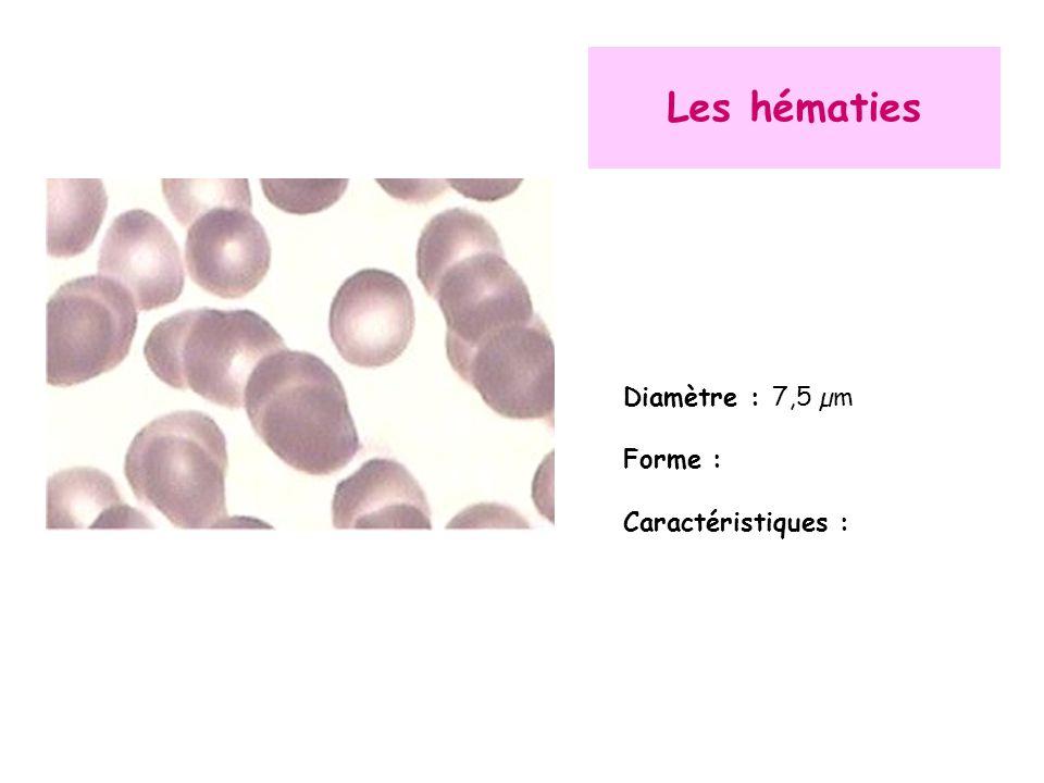 Les hématies Diamètre : 7,5 µm Forme : Caractéristiques :