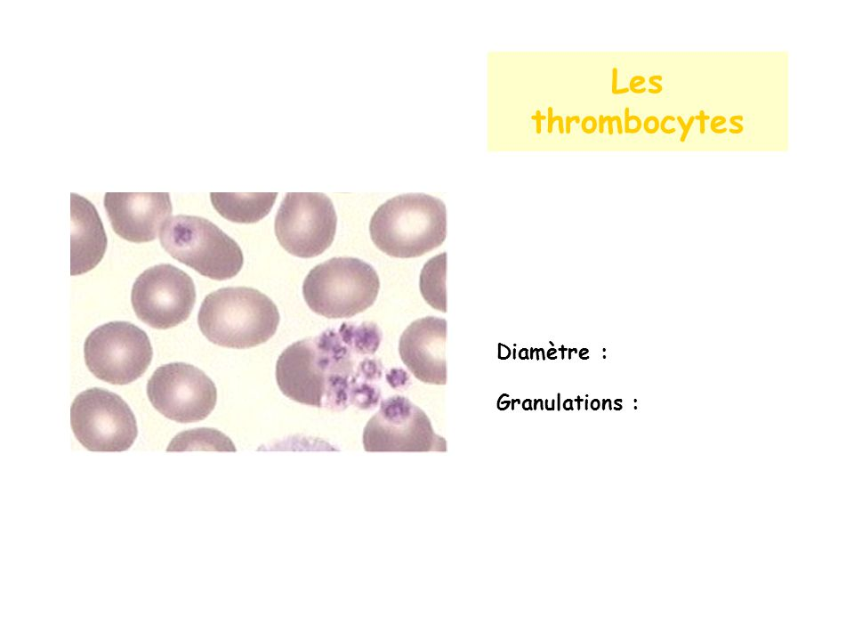 Les thrombocytes Diamètre : Granulations :