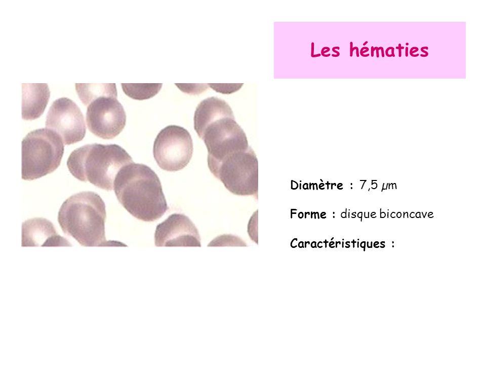 Les hématies Diamètre : 7,5 µm Forme : disque biconcave