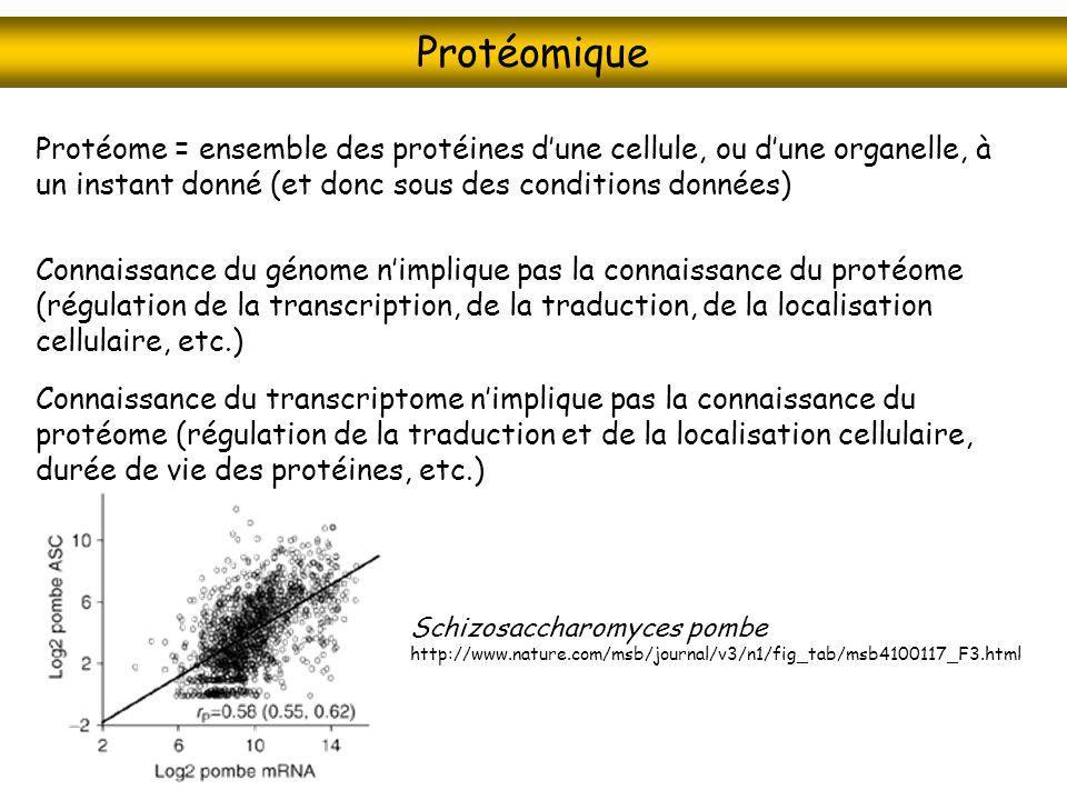 Protéomique Protéome = ensemble des protéines d'une cellule, ou d'une organelle, à un instant donné (et donc sous des conditions données)