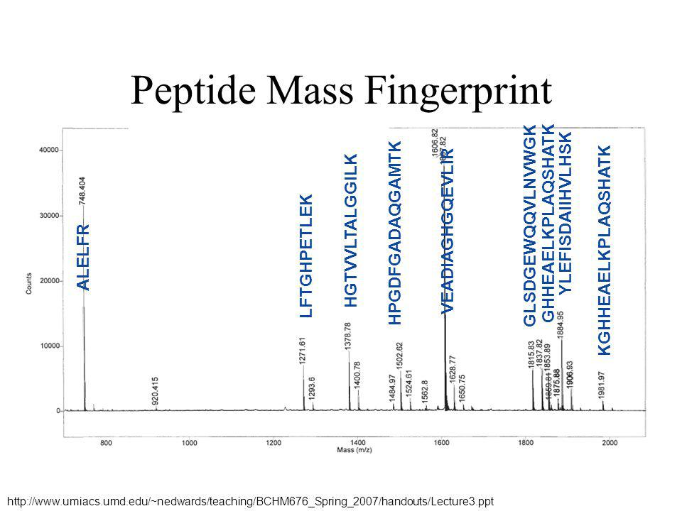 Peptide Mass Fingerprint