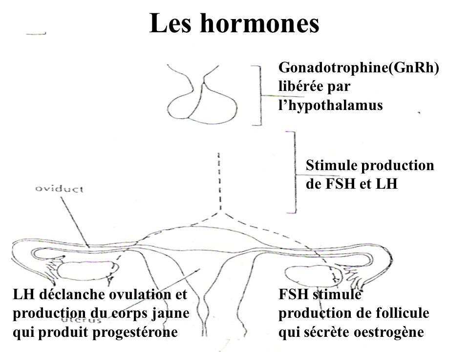 Les hormones Gonadotrophine(GnRh) libérée par l'hypothalamus